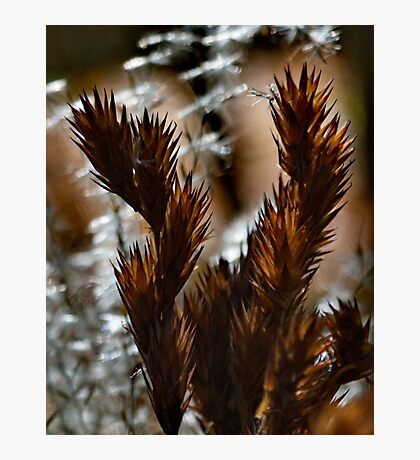 Afternoon Ferns Photographic Print