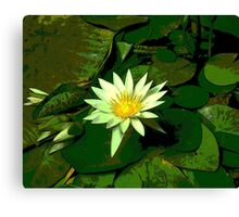 Green and White Water Lily Flower Canvas Print