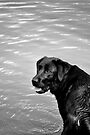 throw the stick, throw the stick...! by Tiffany Dryburgh