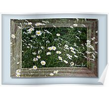 Daisies Gone Wild ~ in a Frame Poster