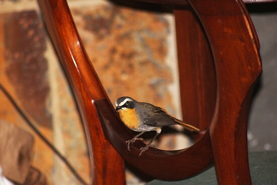 Another visit from the Robin by Maree  Clarkson