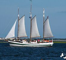 Sail Boat in Charleston Harbour by TJ Baccari Photography