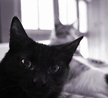 Little Black Kitten by MissDucklette