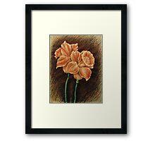 Orange Daffodils  Framed Print