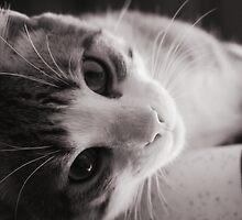 Lazy Kitten by MissDucklette