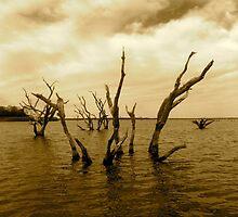 Lake Somerville by Larissa  White Brown