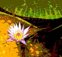 Pink Water Lily Photograph by LastLittleBird