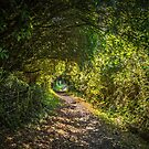 Bush Covered Walking Track by Michael McGimpsey