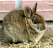 Florida Yard Bunny ~ a Wild Rabbit by SummerJade