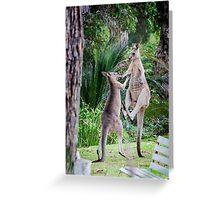 Male Kangaroos Fighting Greeting Card