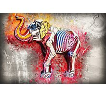 Elephant Inside Out Photographic Print