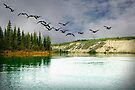 Fall Migration on the Yukon River by Yukondick