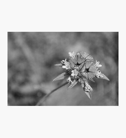 black en white flower Photographic Print