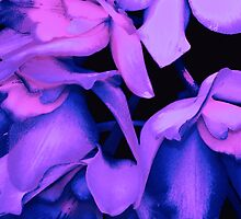 ORCHIDS by Thomas Barker-Detwiler