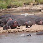 Hippopotamus, Tanzania by miaastewart