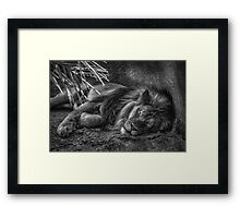 Lazy Leo Framed Print