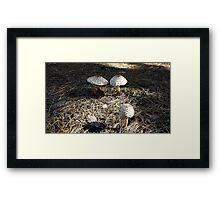 Natural Mushrooms Framed Print