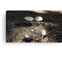 Natural Mushrooms Canvas Print