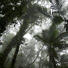 Rainforests of Nett - Pohnpei Island, Micronesia by Alex Zuccarelli