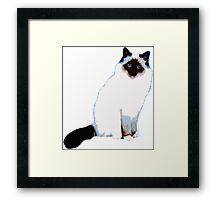 Fluffy White Cat Framed Print