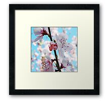 Peach Blossom Time Framed Print