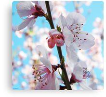 Peach Blossom Time Canvas Print