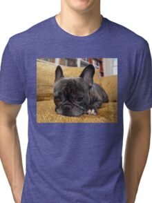 Pondering Frenchie Pup Tri-blend T-Shirt