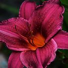 My Lily My Love by Vickie Emms