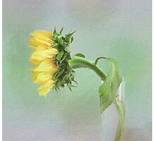 Sunflower in Profile Photographic Print