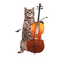 Cello Cat - Meowsicians Photographic Print