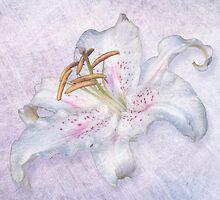 Lily by Lynn Bolt
