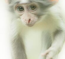 ....are you a Monkey..? by John44