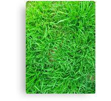 Grass Canvas Print