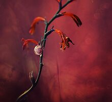 Small shel on the dry flowers by JBlaminsky