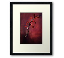 Small shel on the dry flowers Framed Print
