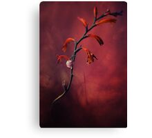 Small shel on the dry flowers Canvas Print