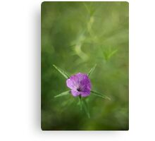 Single and violet Canvas Print