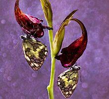Duet in violets by JBlaminsky