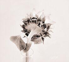 Portrait of a Sunflower  by LouiseK