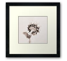 Portrait of a Sunflower  Framed Print