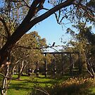 The Kookaburra sits in the old gum tree, Pyalong Vic Australia by Margaret Morgan (Watkins)