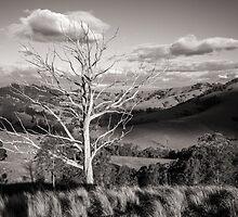 Mount Richardson Australia  by runninglight