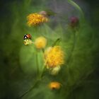 Magic Garden by JBlaminsky