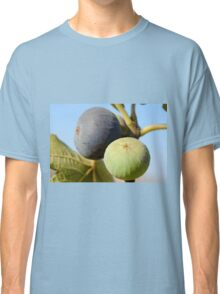 fruit and leaves of a fig tree Classic T-Shirt