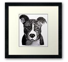 Good Dog Pit Bull Framed Print