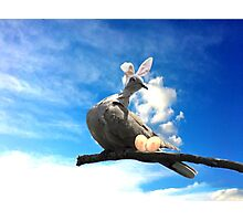 Easter Pigeon Photographic Print