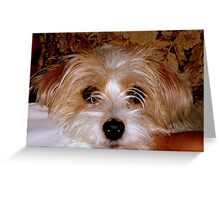 SPOILED ROTTEN! Greeting Card