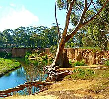 Struggles of one tree on the  banks of  Werribee River, Vic. Australia by EdsMum