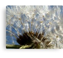 Blue Skies and Dandelions Canvas Print