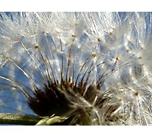 Blue Skies and Dandelions Photographic Print